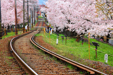 wood railroads: Railway and sakura tree