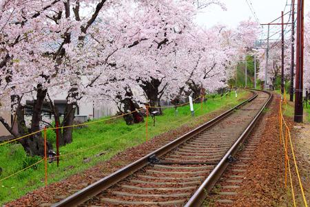 sakura arbol: Ferrocarril con el �rbol de sakura Foto de archivo