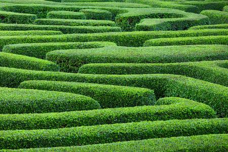 hedges: Plant maze