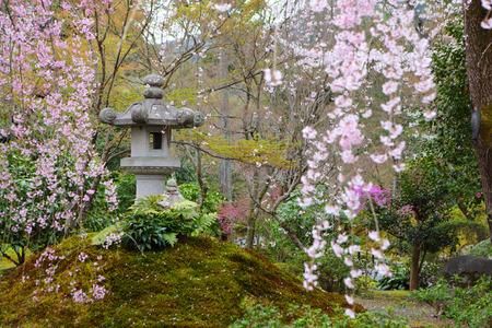 sakura arbol: Parque japon�s con el �rbol de sakura