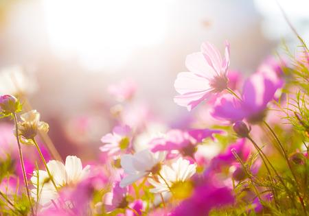 flores moradas: Margarita bajo la luz del sol