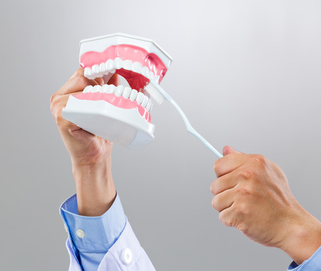 Dentist hold with denture and toothbrush photo