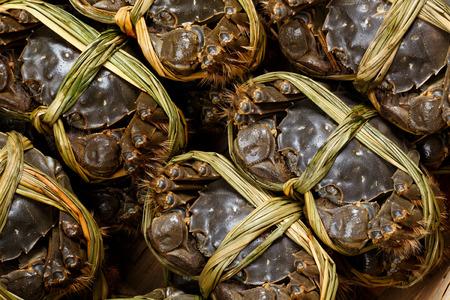 frescura: Frescura cangrejos peludos