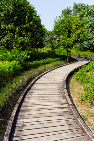 though: Wooden pathway though forest