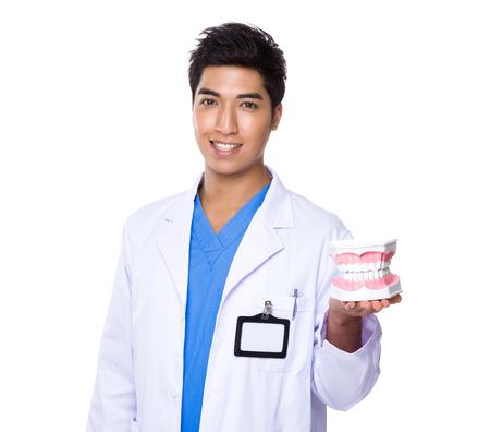 dentist: Dentist holding with denture