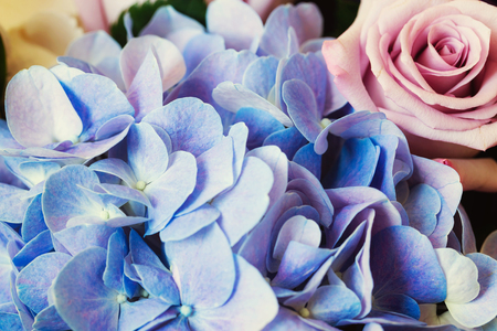 purple rose: Blue Hydrangea and purple rose
