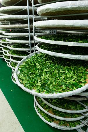 evaporate: Tea factory in TaiTung, TaiWan