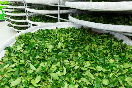 agitation: Fermentation of tea