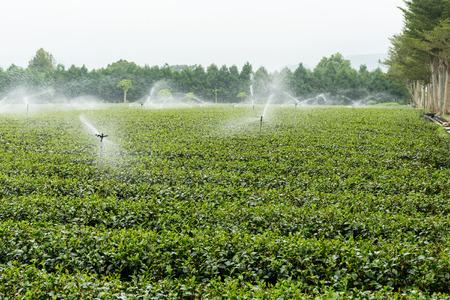highlands: Cameron highlands tea plantation