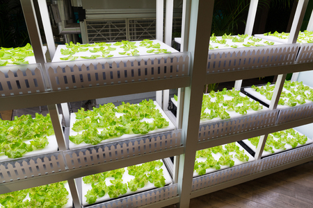 Vegetable garden with Water Hydroponics system
