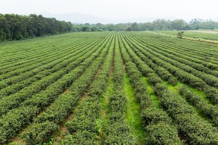 water sprinkler: Water sprinkler at the tea farm Stock Photo