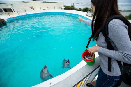 warm water fish: Woman feeding dolphin in aquarium
