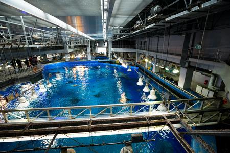 warm water fish: Giant Water tank in Aquarium