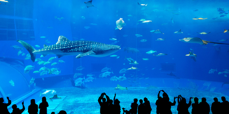 okinawa: Japan Okinawa aquarium
