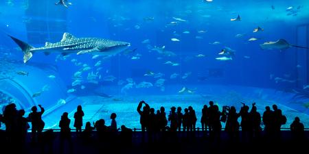 수족관에서 거대한 고래 상어
