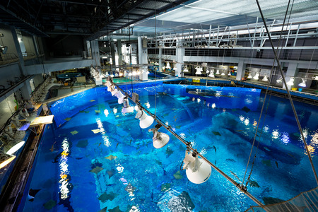 warm water fish: Water tank in Aquarium