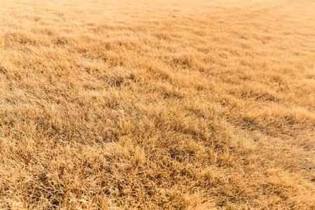 hay: Dry hay Stock Photo