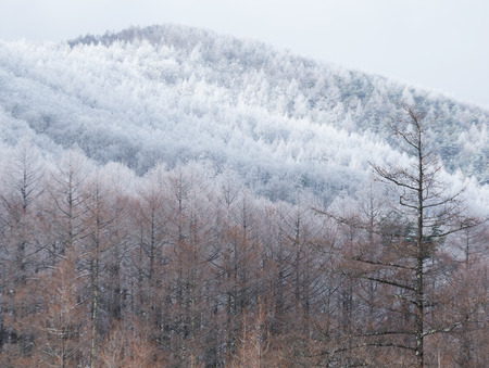 non urban: Winter trees on snow