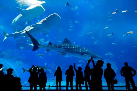 水族館 写真素材