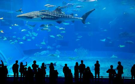 aquarium: Okinawa Churaumi Aquarium