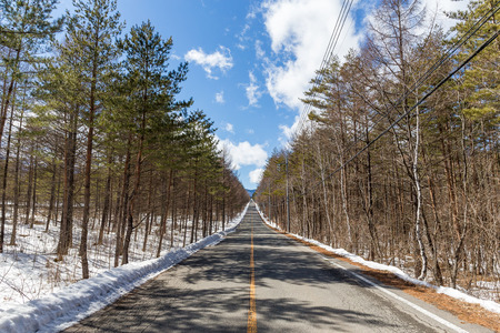 winter road: Winter road and forest