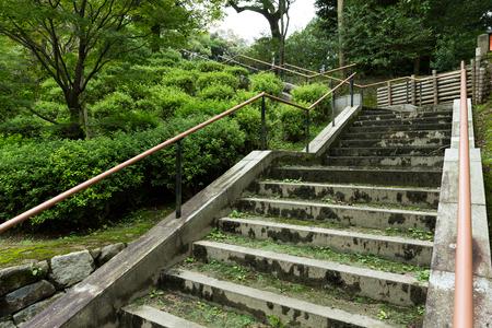 woodland  horror: Stone stairs Stock Photo