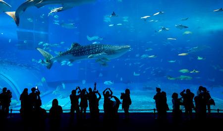 peces de acuario: Acuario en la ciudad de Okinawa Foto de archivo