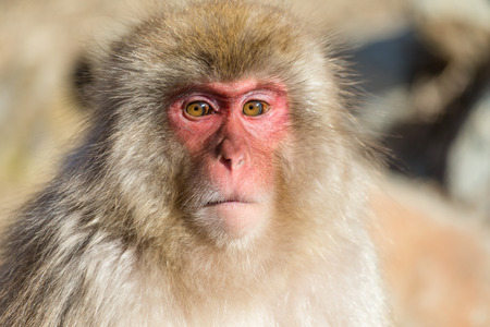 wildness: Wildness Monkey Stock Photo