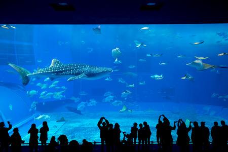 fishtank: Aquarium in Okinawa Stock Photo