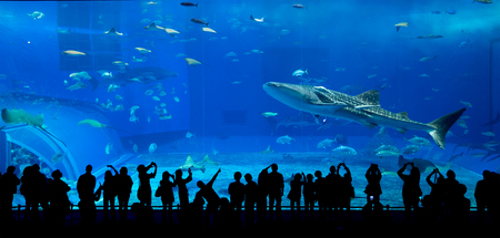 Aquarium in Okinawa Stock Photo