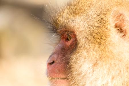 mud snow: Side profile of monkey