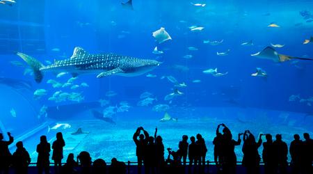 沖縄美ら海水族館 写真素材