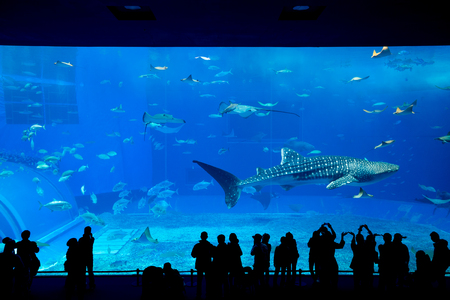 Aquarium in Okinawa Stock Photo