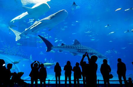 沖縄市の水族館