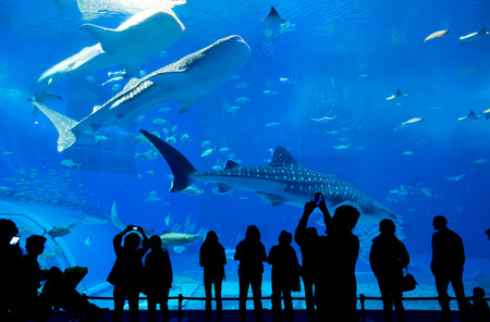 Oceanarium in Okinawa city Stock Photo