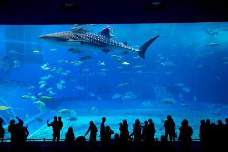 fishtank: Okinawa Aquarium