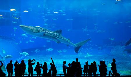 fishtank: Okinawa Churaumi Aquarium