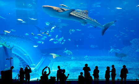 whale shark: Silhouettes of people and giant whale shark in Oceanarium