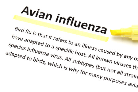 avian: English dictionary means of Avian influenza Stock Photo