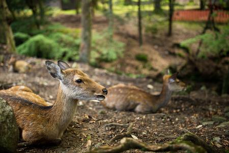 Deer sitting at park Stock Photo