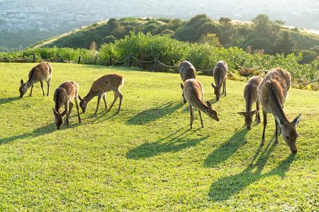 Group of Doe Deer in natural landscape
