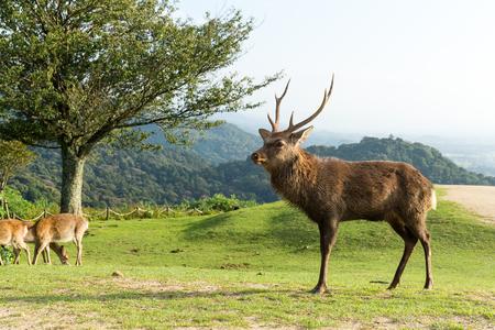Deer and natural landscape Stock Photo