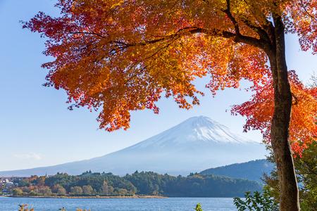 Mount Fuji and autumn maple leaves
