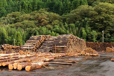 felled: Pine timber stacked at lumber yard Stock Photo
