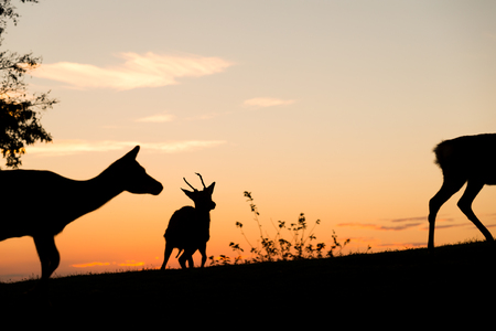 Group of Deer with beautiful sky Stock Photo