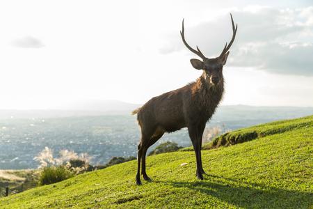 Doe Deer Stock Photo