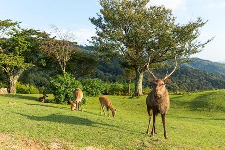 Group of Doe Deer Stock Photo