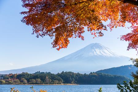 Mount Fuji and maple tree