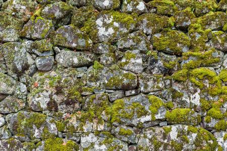 lichen: Brick wall texture with lichen