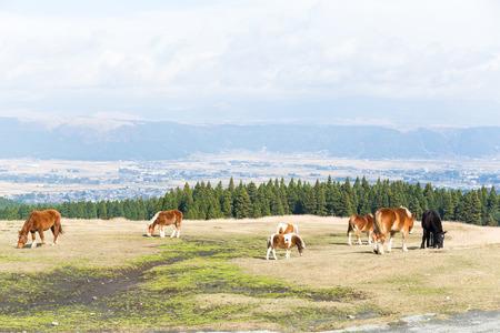 Pastures of horse farm